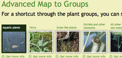 What's a plant group: small             screenshot